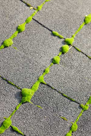 Roof Cleaning Quam S Carpet Cleaning Vancouver Wa