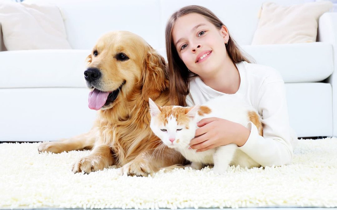 Young girl on carpet floor with a dog and cat