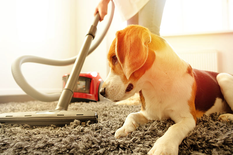 Maintaining Carpets After a Professional Cleaning